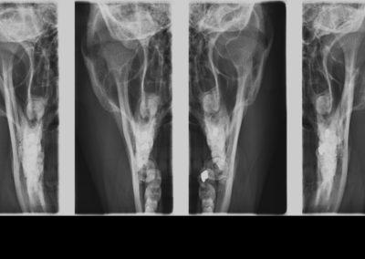 9. čelistní klouby PA při otevřených a zavřených ústech